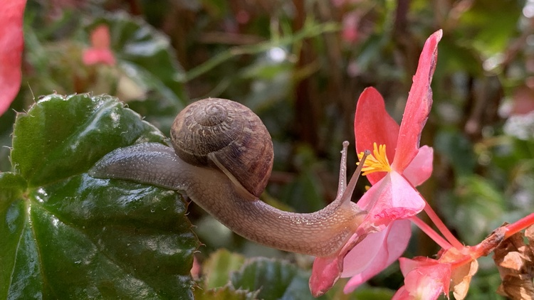 A Southern Californian    community science project    is dedicated to studying the biodiversity of the region's snails and slugs.