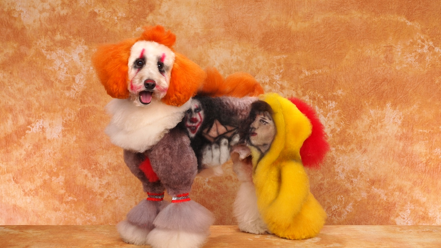 """This dog, owned by Angela Kumpe, is part of the creative grooming competition and styled after Pennywise from the movie """"It."""""""