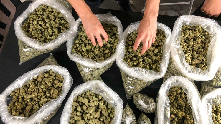 The state's legal cannabis market is on track to hit $3.1 billion in sales this year. But the unlicensed market is expected to be far larger, at an estimated $8.7 billion.