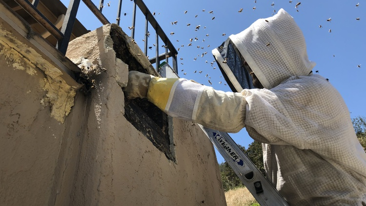 Texas beekeeper Erika Thompson posted a video of her removing a swarm of bees from an umbrella and moving them into a box — all with her bare hands. No protective gear whatsoever.