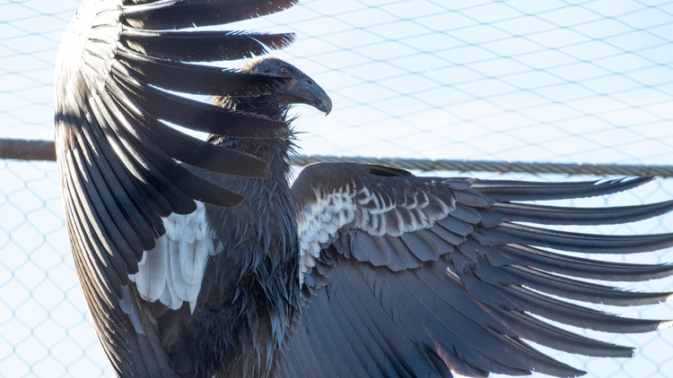 On this Labor Day, Greater LA replays highlights from the past few months. Condors are making a comeback — after being on the brink of extinction.