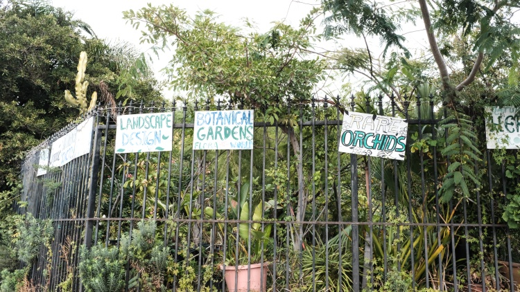 XOTX Tropico Nursery, founded in 1988, is a haven for endangered plant life. But now it's endangered itself. The owner is required to vacate the nursery by December 30.