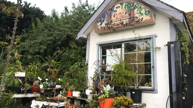 A West Hollywood 'botanical museum' will soon be uprooted
