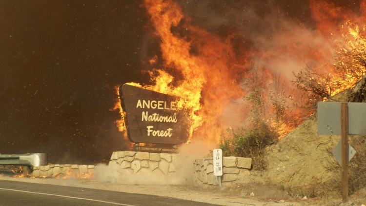 An explosion rocked a South LA residential neighborhood on Wednesday when the LA Police Department tried to detonate a cache of illegal fireworks they seized earlier in the day.