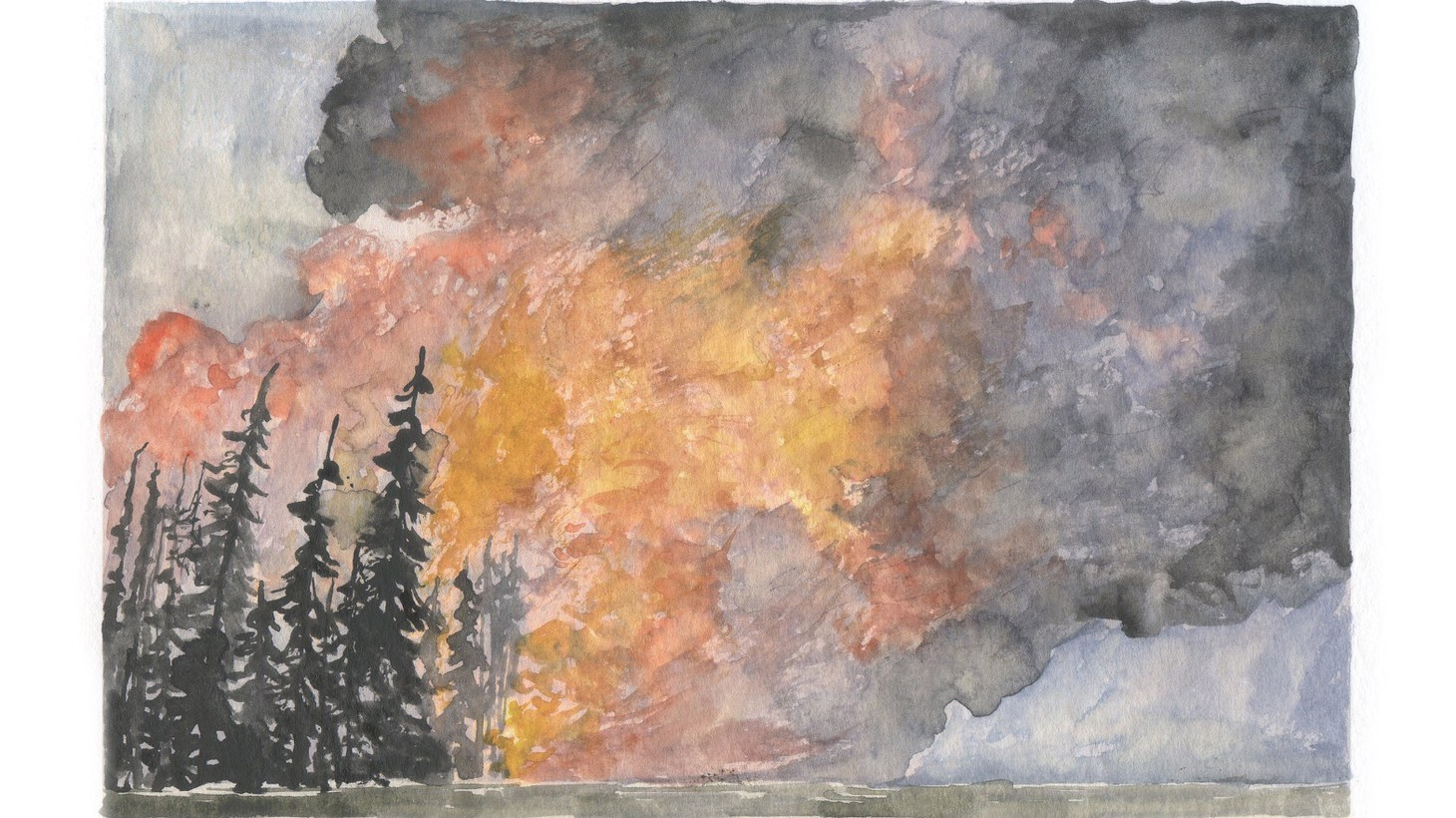 """""""Safety is paramount, especially in these days of high summer,"""" artist and author Obi Kaufmann says about the recent forest closures."""