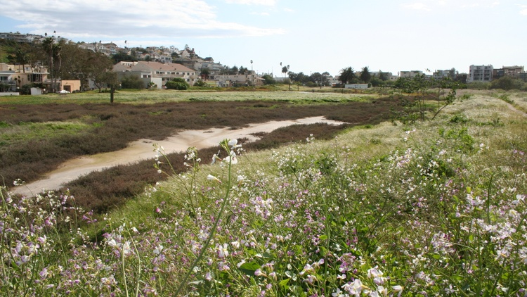 The Ballona Wetlands are juxtaposed against busy streets and tech companies. The area is a small, serene stretch of marsh, mud flats and birds.