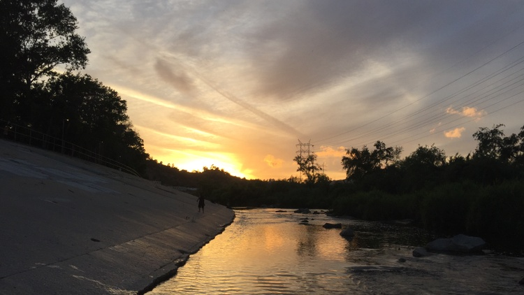The Glendale Narrows section of the LA River doesn't have a cement bottom. That means plants and trees can grow there, attracting nearby wildlife.