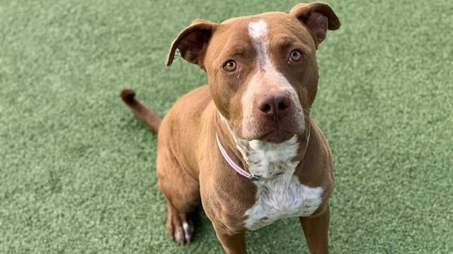 Due to a rise in adoptions this past year, Marcia Mayeda says animals in LA County shelters are less stressed, and the infectious disease rate has dropped by more than 50%.