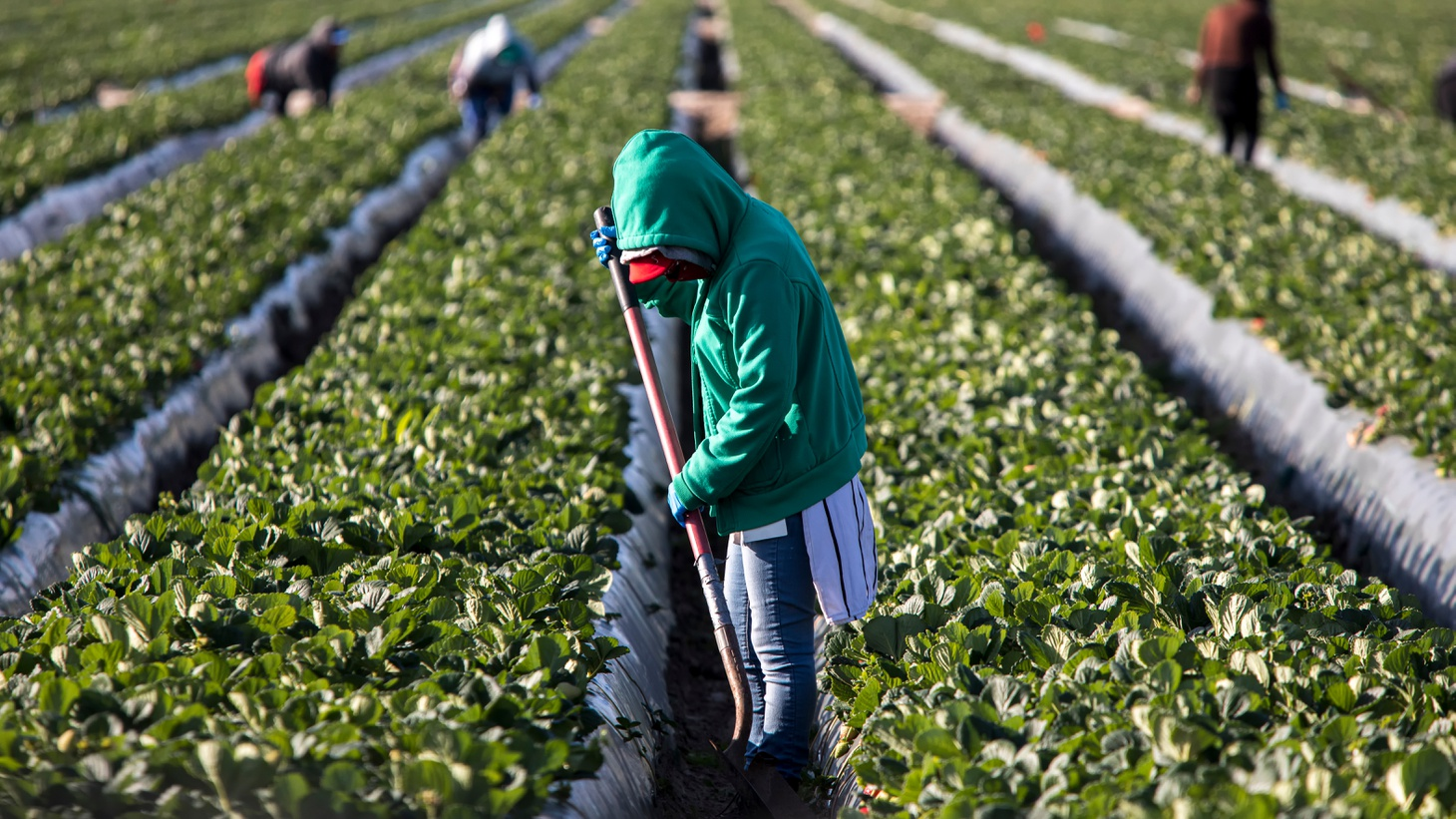 New legislature would allow farmworkers to vote in the privacy of their homes.