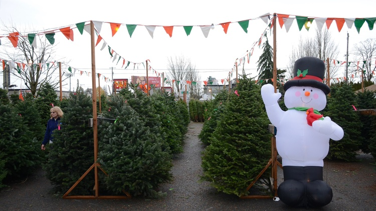 Tis the season of going to a parking lot full of Christmas trees to haggle with a vendor and bring home a tree. But where do LA's Christmas trees actually come from?