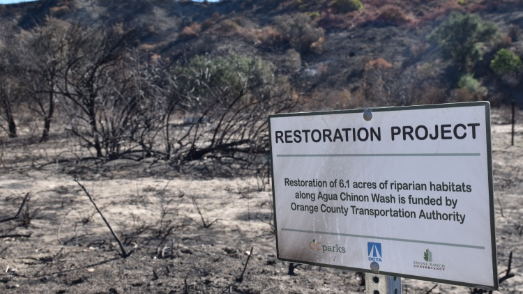 The wind-driven Silverado Fire in Irvine burned 12,466 acres two months ago. The land is a scorched checkerboard with some areas black and barren, and others with signs of life.