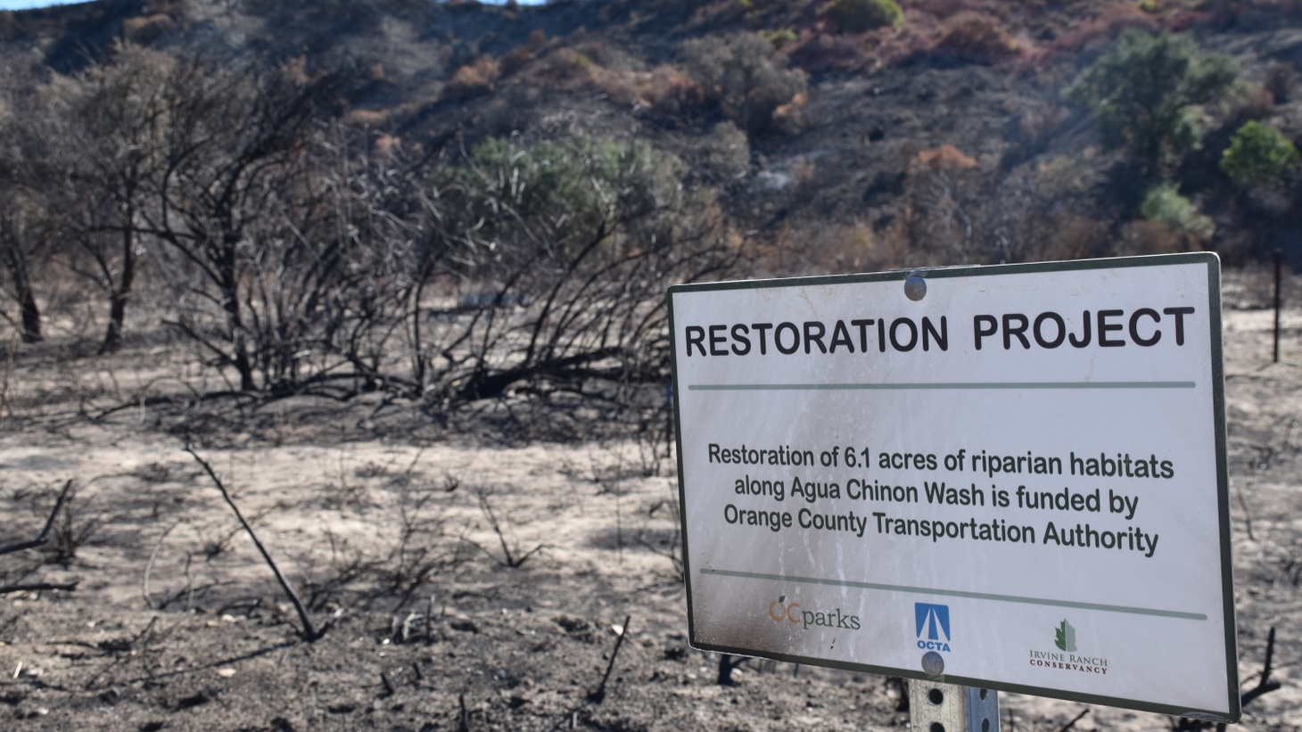 The Silverado Fire in October burned through Orange County's Agua Chinon Canyon, a riparian area that the Irvine Ranch Conservancy had just finished restoring.