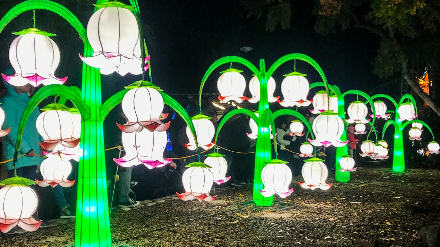 A forest at the Chinese Lantern Festival in Pomona.