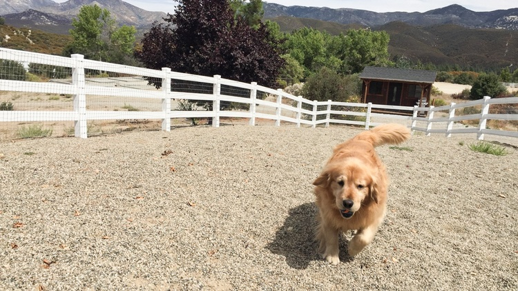 A 6-year-old golden retriever named Max is the mayor of Idyllwild, which is an unincorporated town and has never had a human mayor.
