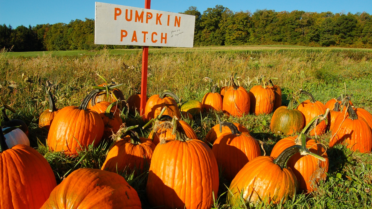 If you want to find the perfect pumpkin this season, check out Mr. Bones Pumpkin Patch in Culver City or Tina's Pumpkin Patch in Sherman Oaks.