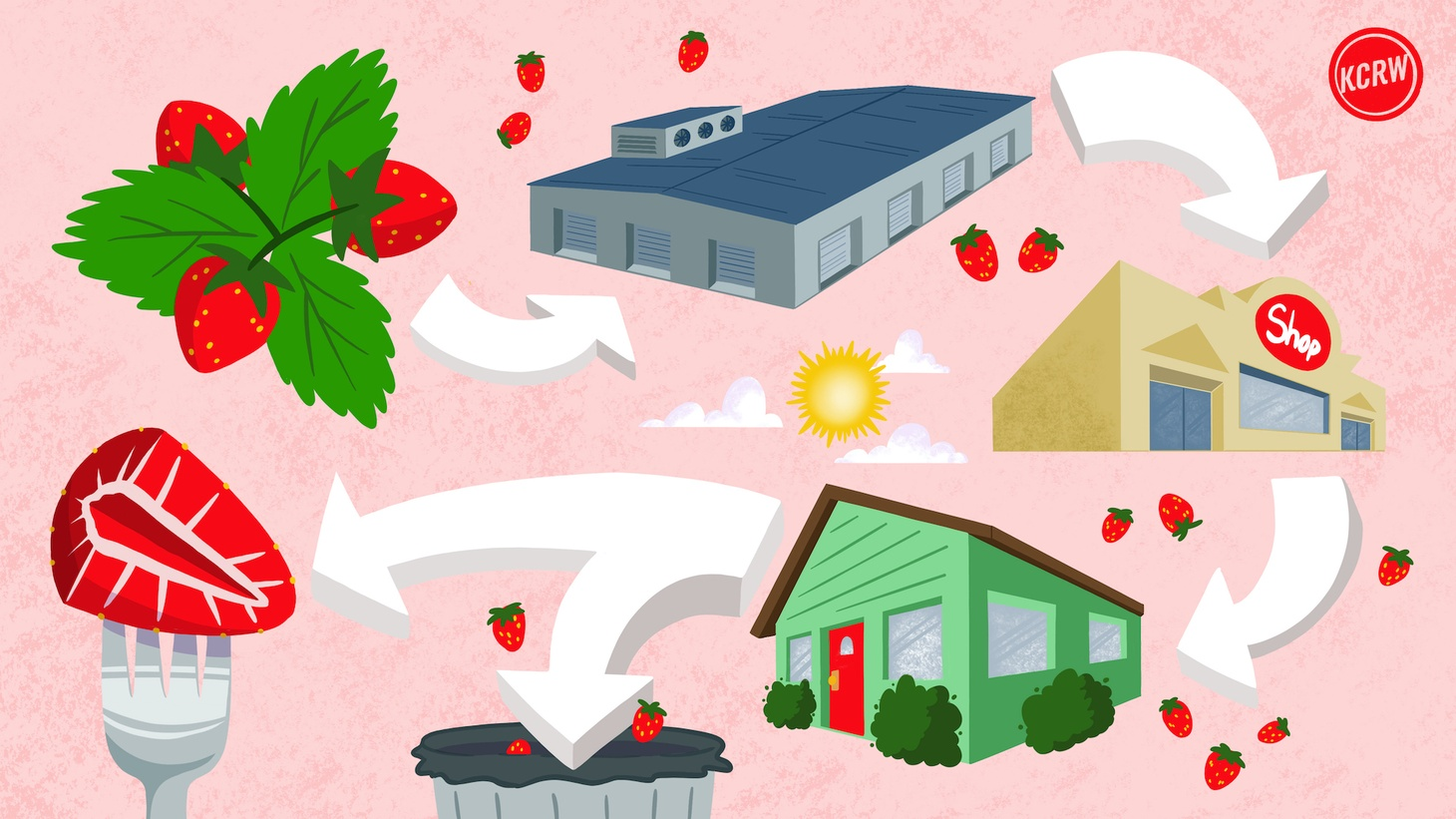 To illustrate California's food waste crisis, KCRW follows a strawberry as it begins on a farm and finally ends up in a person's meal or trash can.