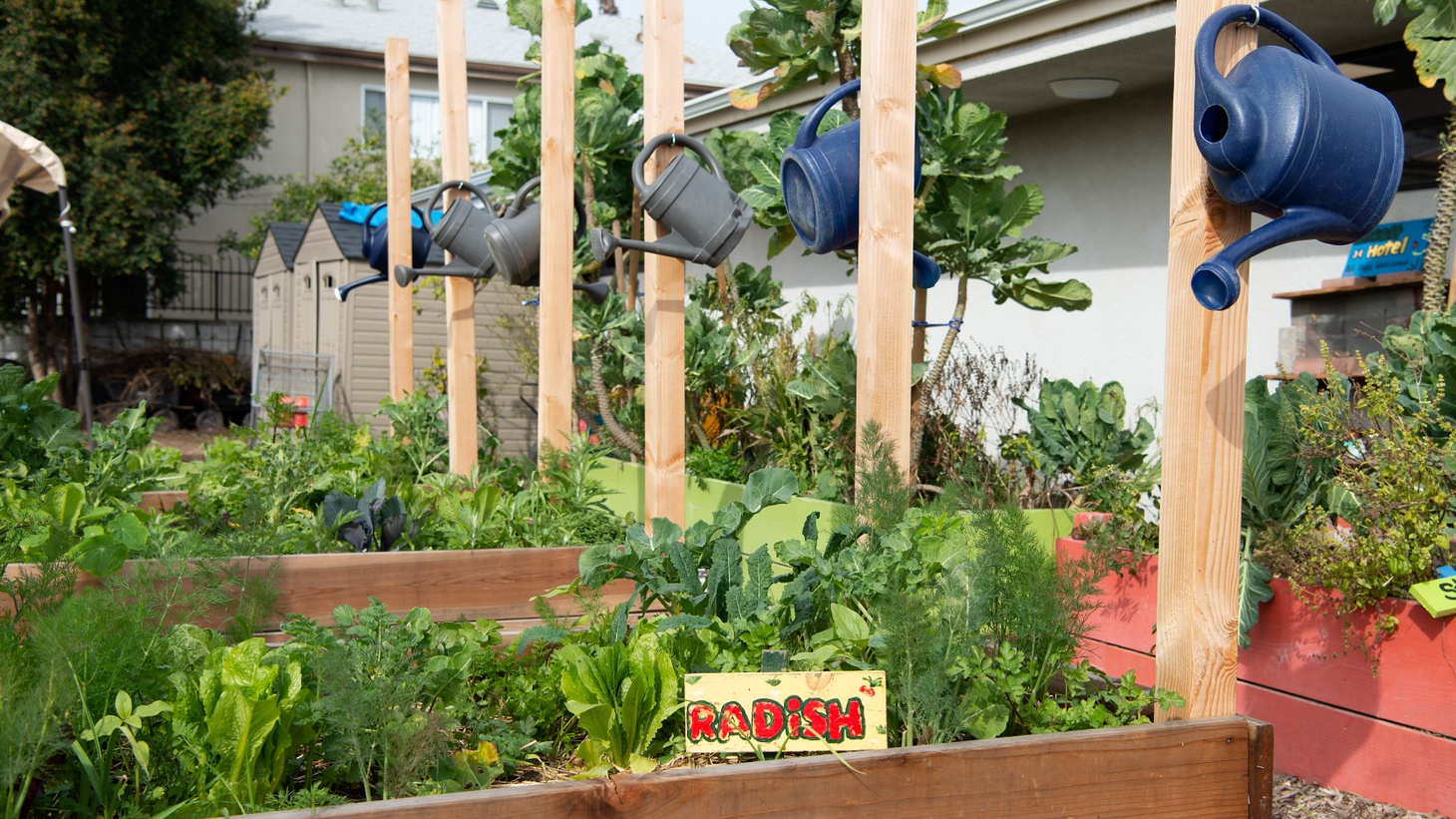Environmental Charter Middle School - Inglewood (ECMS-I) grows food year-round, producing enough harvest to provide free fresh produce to its school community.