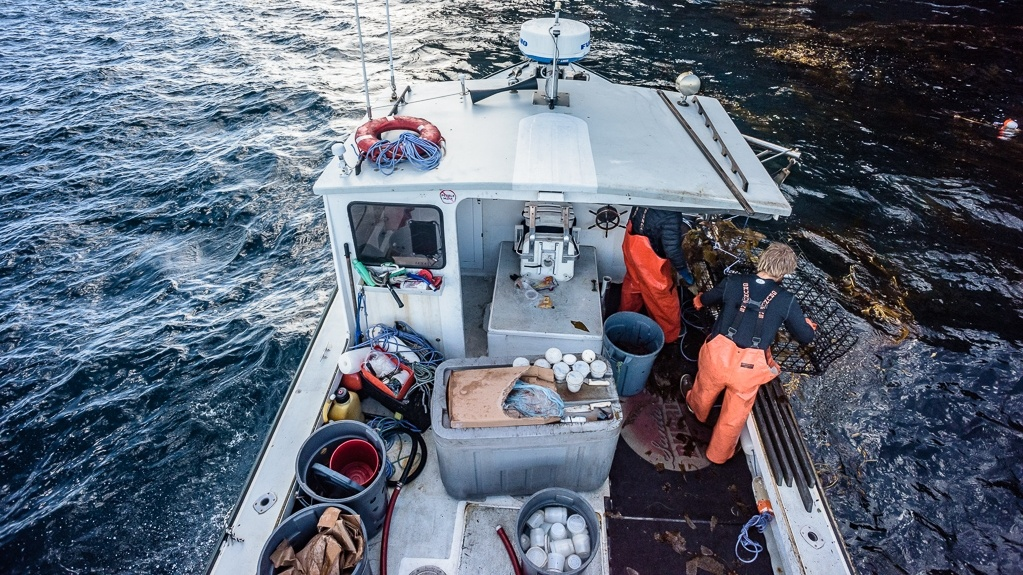 Fisherman James Voss catches spiny lobster off the Channel Islands