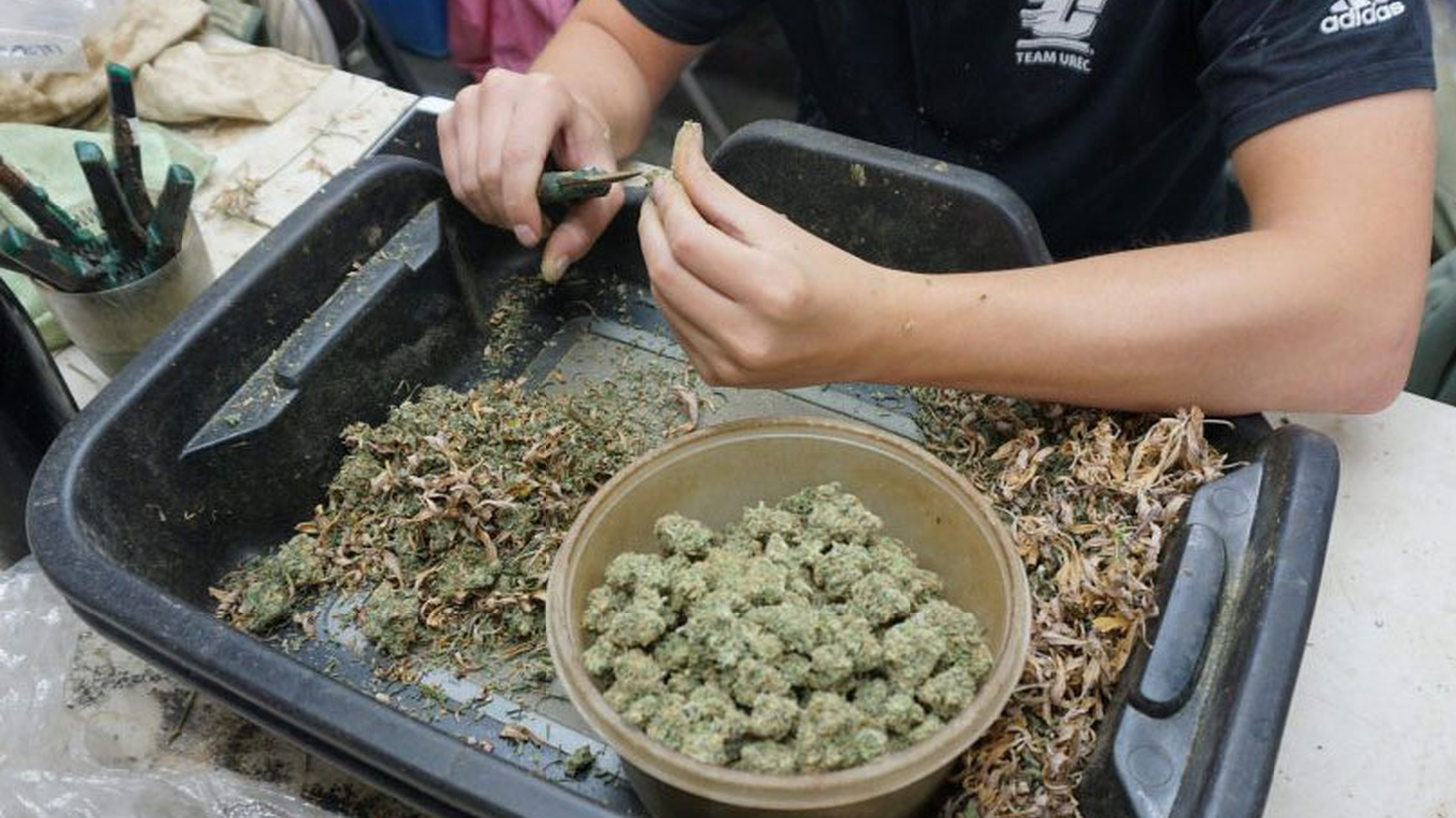 Recreational marijuana is now legal in California. So what will it cost you? KCRW goes to a local shop to find out how business will change.