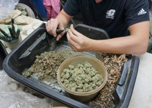How much will legal pot cost in California?