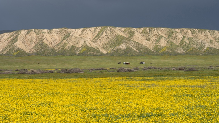 The Carrizo Plain National Monument boasts extensive spring wildfire blooms, and it's home to one of the highest concentrations of endangered species in California.