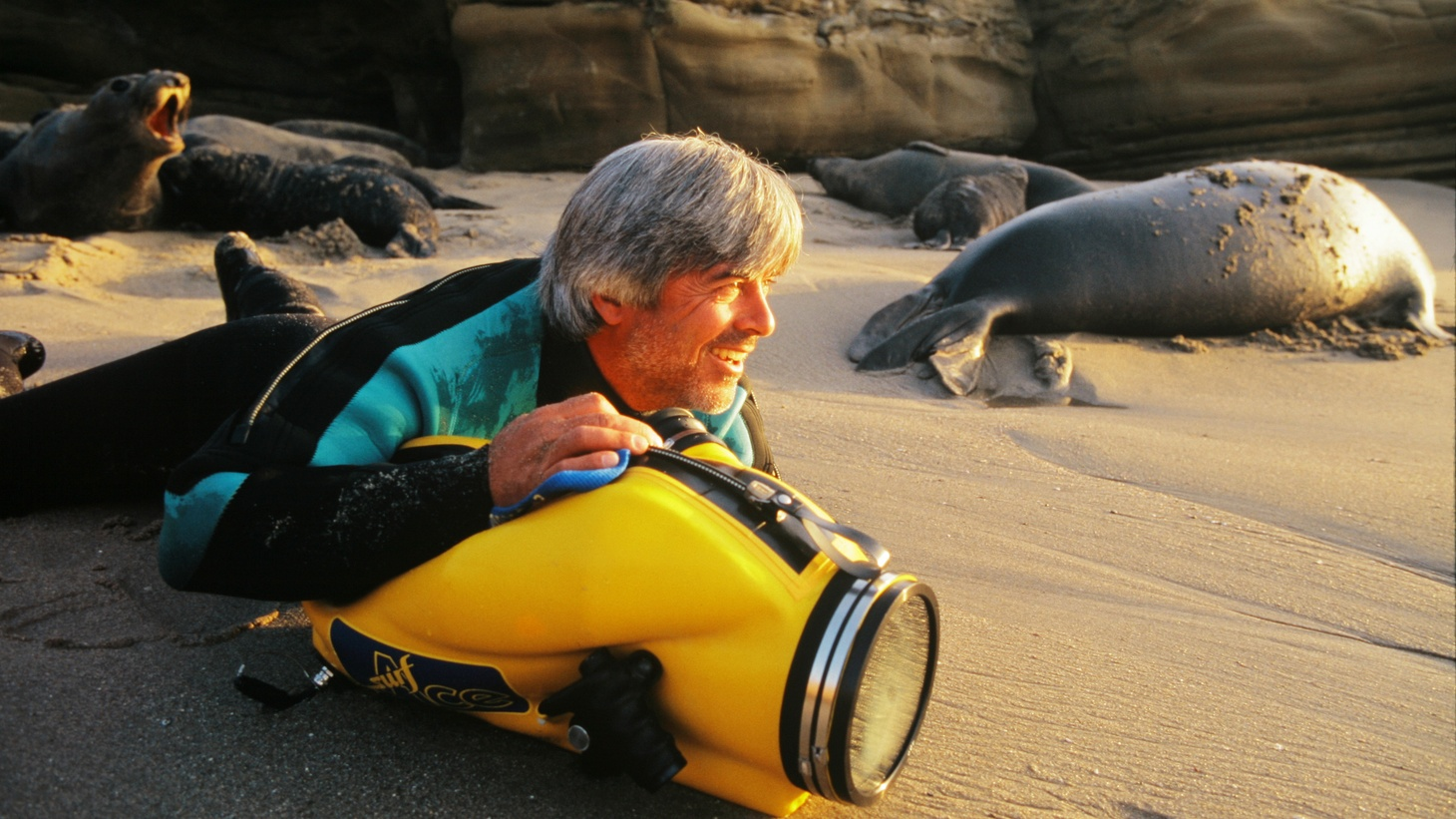 Mike deGruy films sea lions on a beach in 1997 during an El Niño.