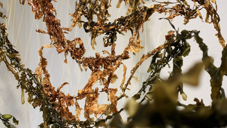 "At the new exhibit ""  Current in the Shadows  ,"" long gold and yellow strands of seaweed hang from the walls and ceiling of Ventura College's New Media Gallery."