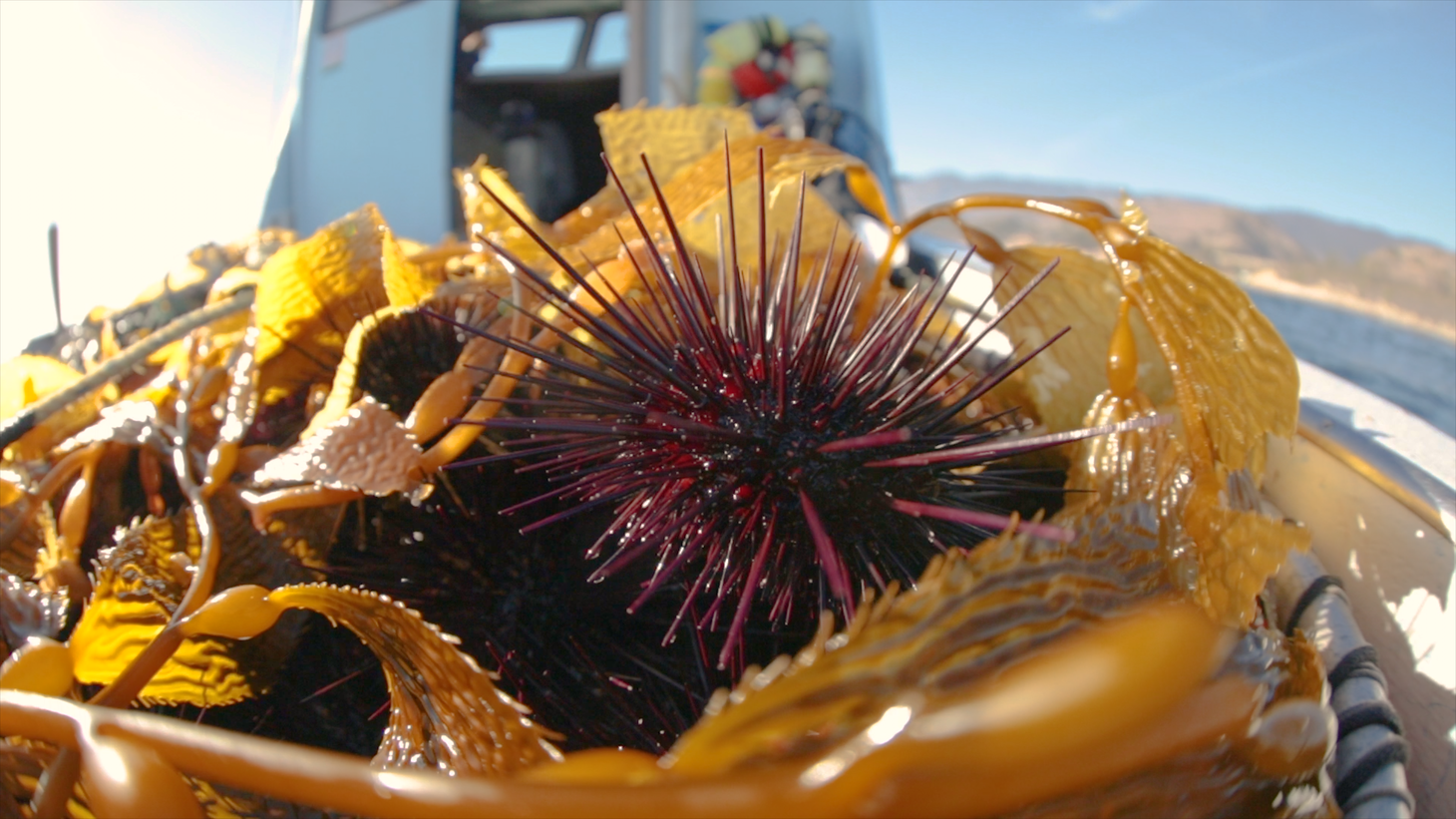 Sea urchin on the boat.