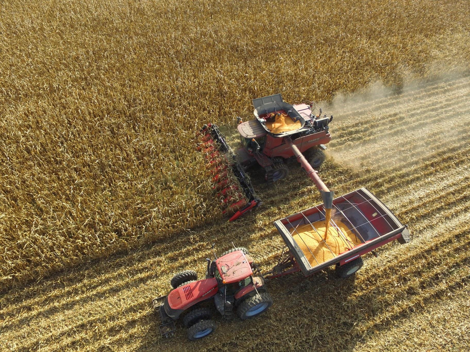 Davis soybean farm.JPG
