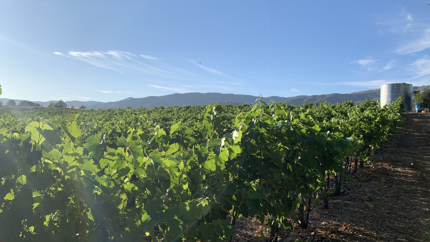 A local vineyard where Angeleno Wine Company gets their grapes.