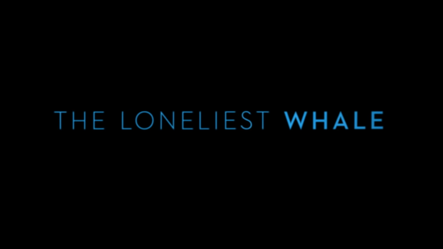 """""""The Loneliest Whale"""" is a documentary about one man's quest to find a whale named """"52,"""" who communicates at the 52 hertz frequency."""
