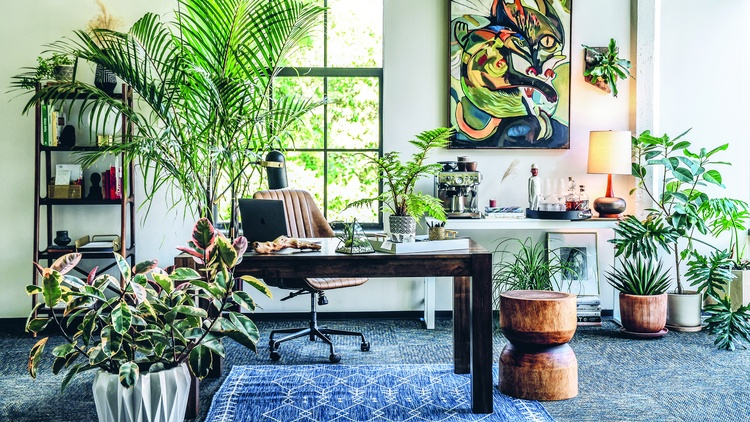 Before choosing which plants to buy, Hilton Carter recommends analyzing how much light a plant's prospective spot will get.