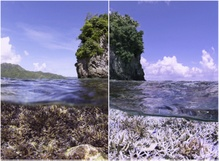 'Chasing Coral' puts spotlight on vanishing coral reefs