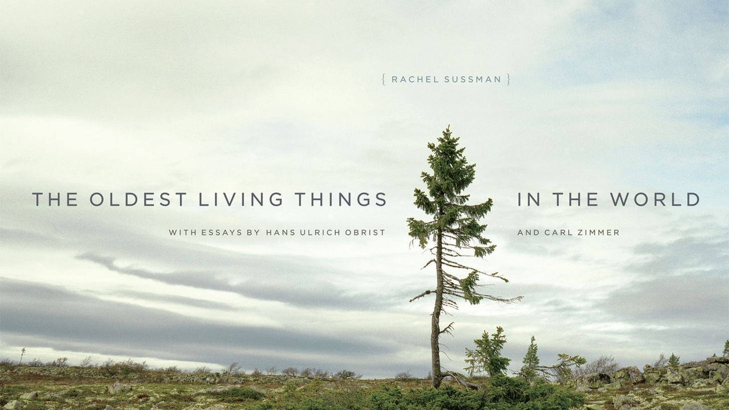 The oldest living thing in the world is a six-hundred-thousand-year-old bacterium, discovered in the permafrost of Siberia. From that bacteria to California's Giant Sequoias to ancient eucalyptus trees in Australia, Rachel Sussman has spent the better part of the last decade seeking out the oldest living things in the world.