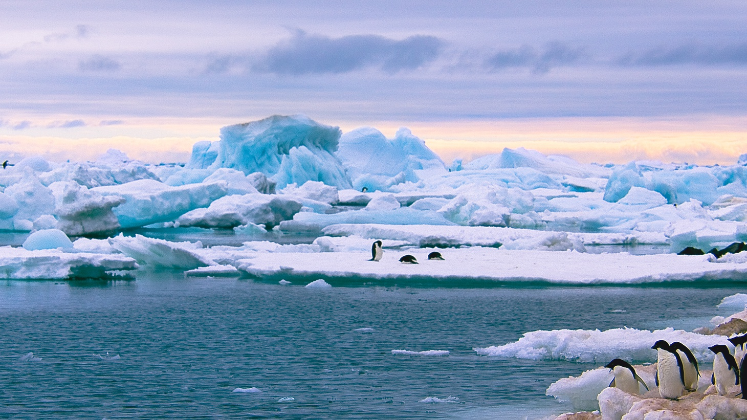 National Geographic announced there is a fifth ocean around Antarctica. It's called the Southern Ocean.