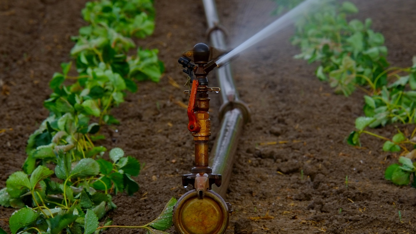 California's water is now an item on the stock market, and farmers can bet on its future price.