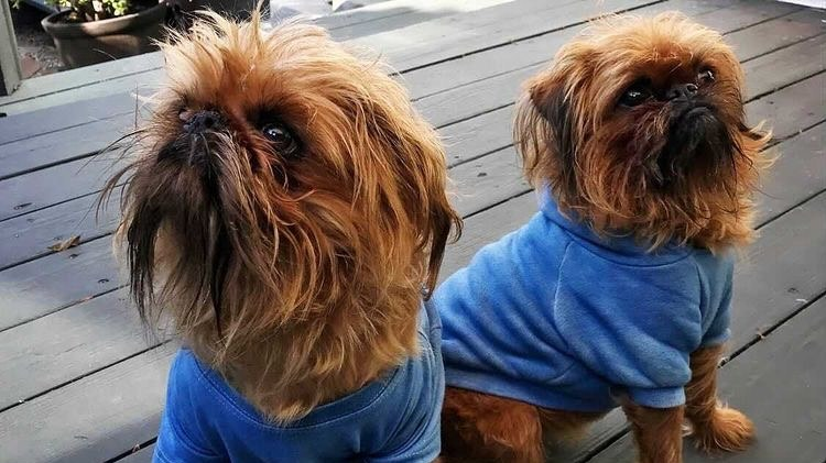 Chef Josef Centeno of Prospect Pine makes hand-dyed clothes, even for dogs.