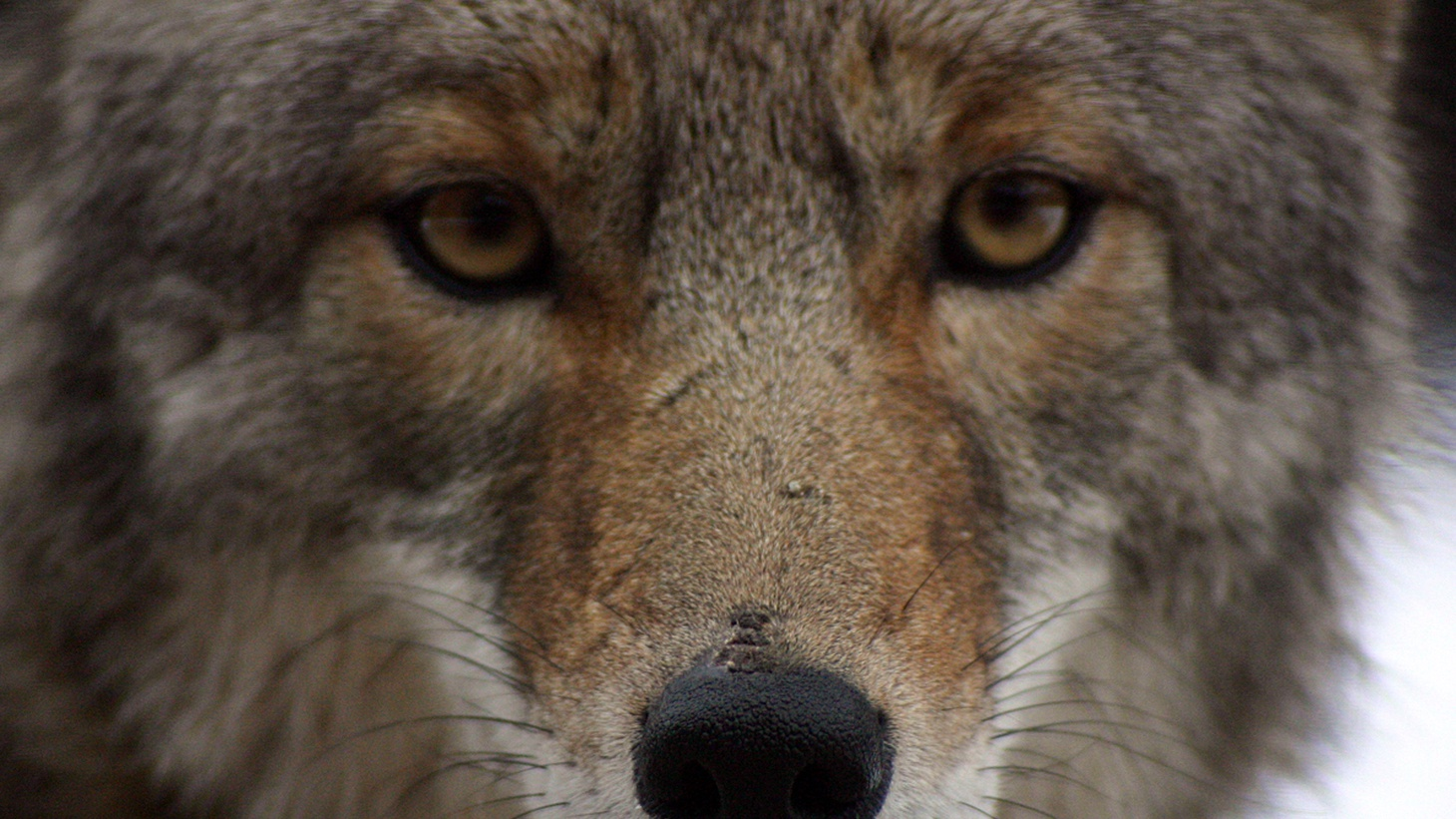 Seal Beach residents plan to kill coyotes in town after a spate of pet attacks. We discuss whether that's the best option. And we look at the latest scary numbers regarding California's dwindling water supply.