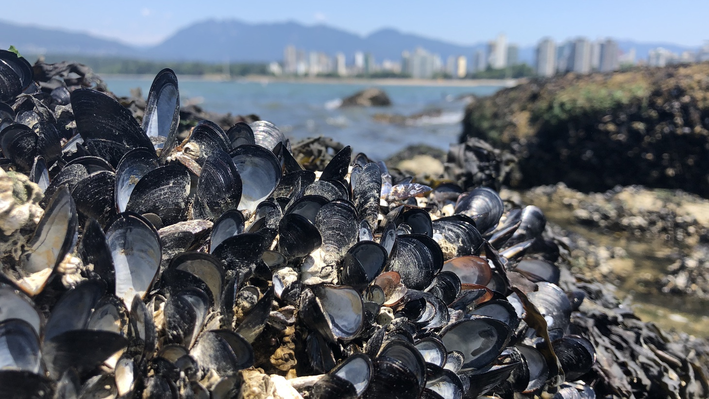 Christopher Harley says he saw a million dead mussels on a tennis court-sized shore of Vancouver.