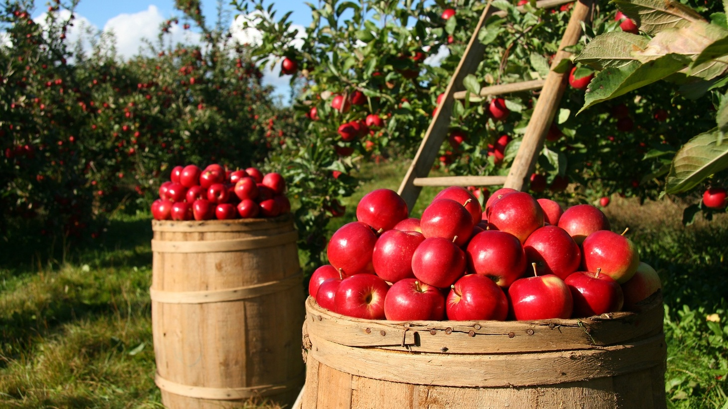 Chlorpyrifos is used on fruit, among other crops.