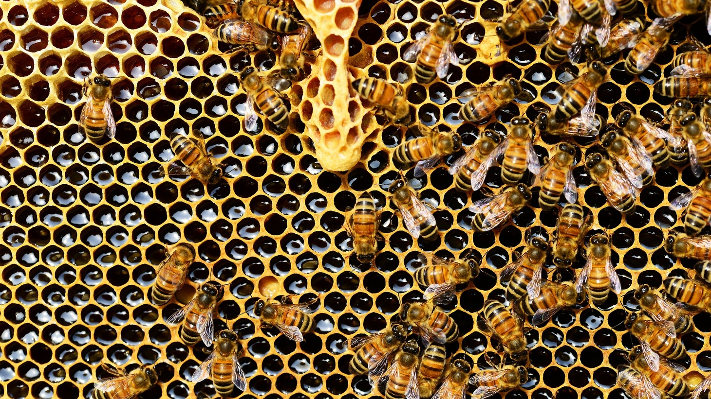 When people move out of buildings, critters such as honey bees sometimes move in.