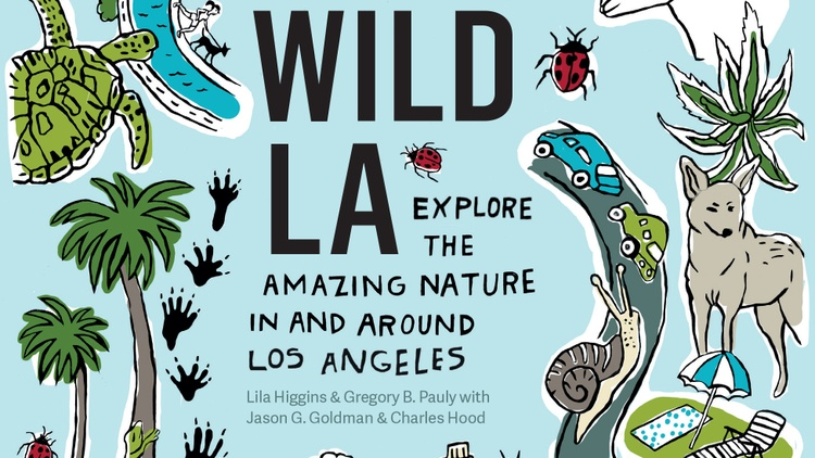 LA is often called a concrete jungle, but it's teeming with wild animals, insects, and plants. More than 500 species of birds live here or pass through as they migrate up the coast.