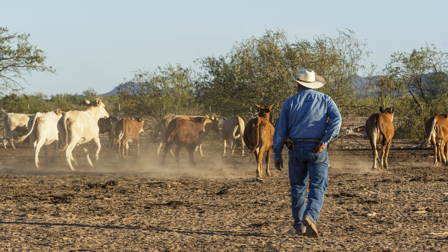 A cowboy overlooks free-range cattle in Sonora, Mexico, June 11, 2015.