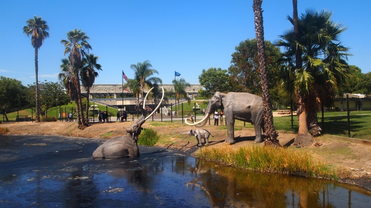he La Brea Tar Pits have waited nearly 40,000 years for a makeover. Three architectural firms are rethinking the 12-acre area, which includes the tar pits, the George C.