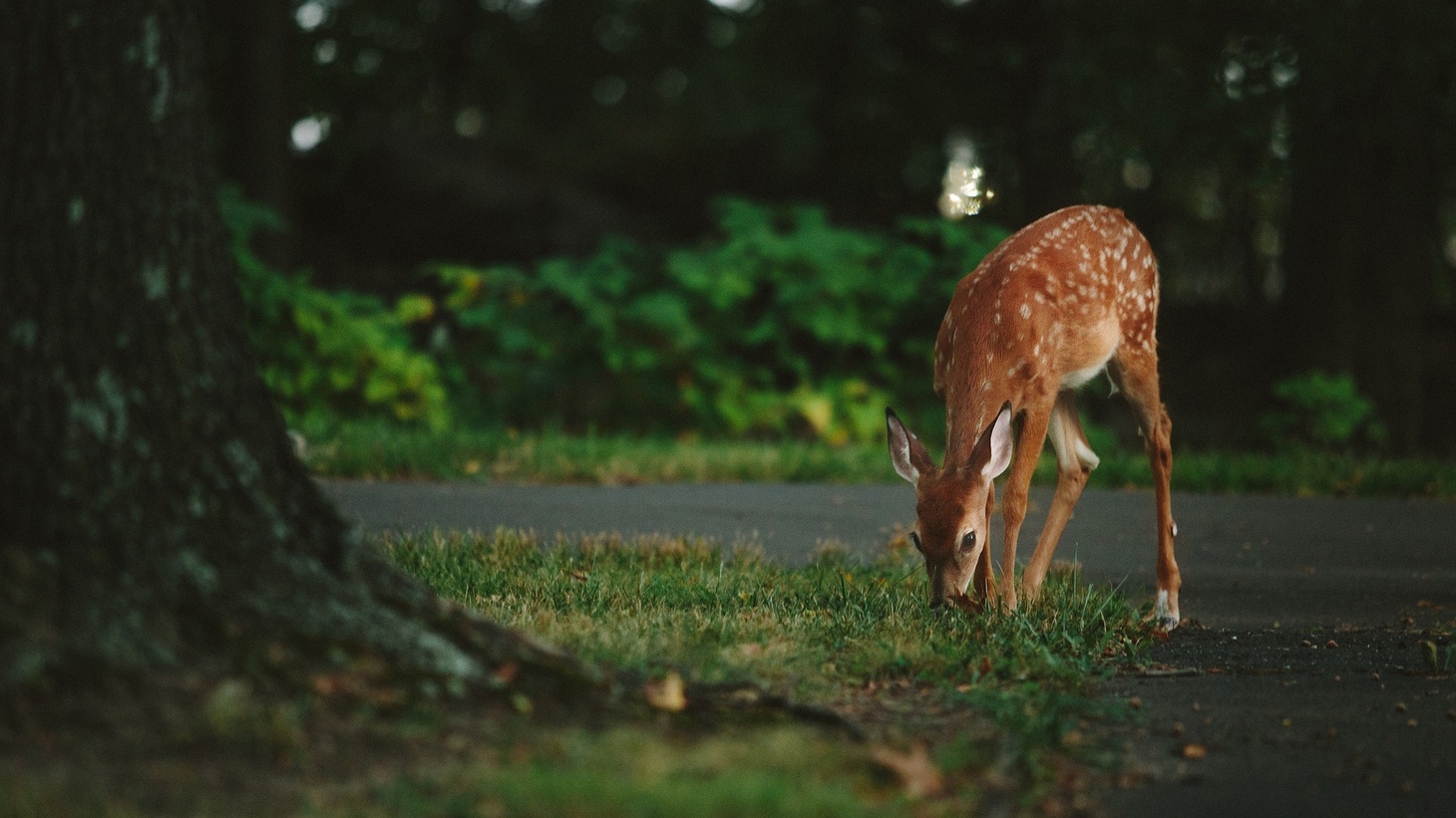 Deer by the side of the road.