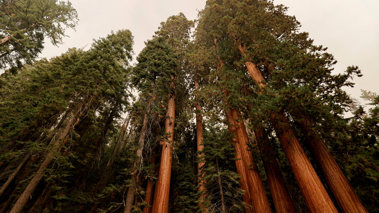 Sequoia trees are seen amid smoke in the Sequoia National Forest in California, U.S. September 17, 2021.