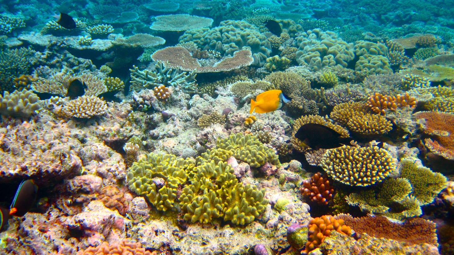 The Great Barrier Reef, 2010.