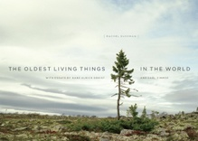 Oldest Living Things