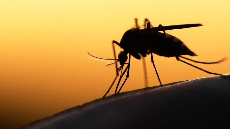 Mosquitoes often travel via plane or cargo ship, and they transmit illnesses such as the West Nile virus. So far, 26 samples have popped up in LA.
