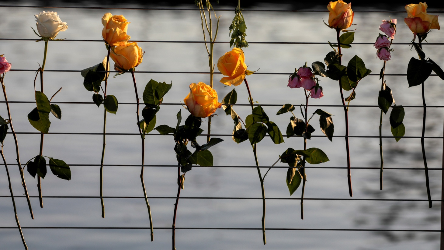 Flowers are fixed to the railing at Truth Aquatics as a search continues for those missing in a pre-dawn fire that sank a commercial diving boat off a Southern California island near Santa Barbara, California, U.S., September 2, 2019.